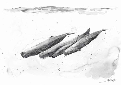 Sperm whales pod