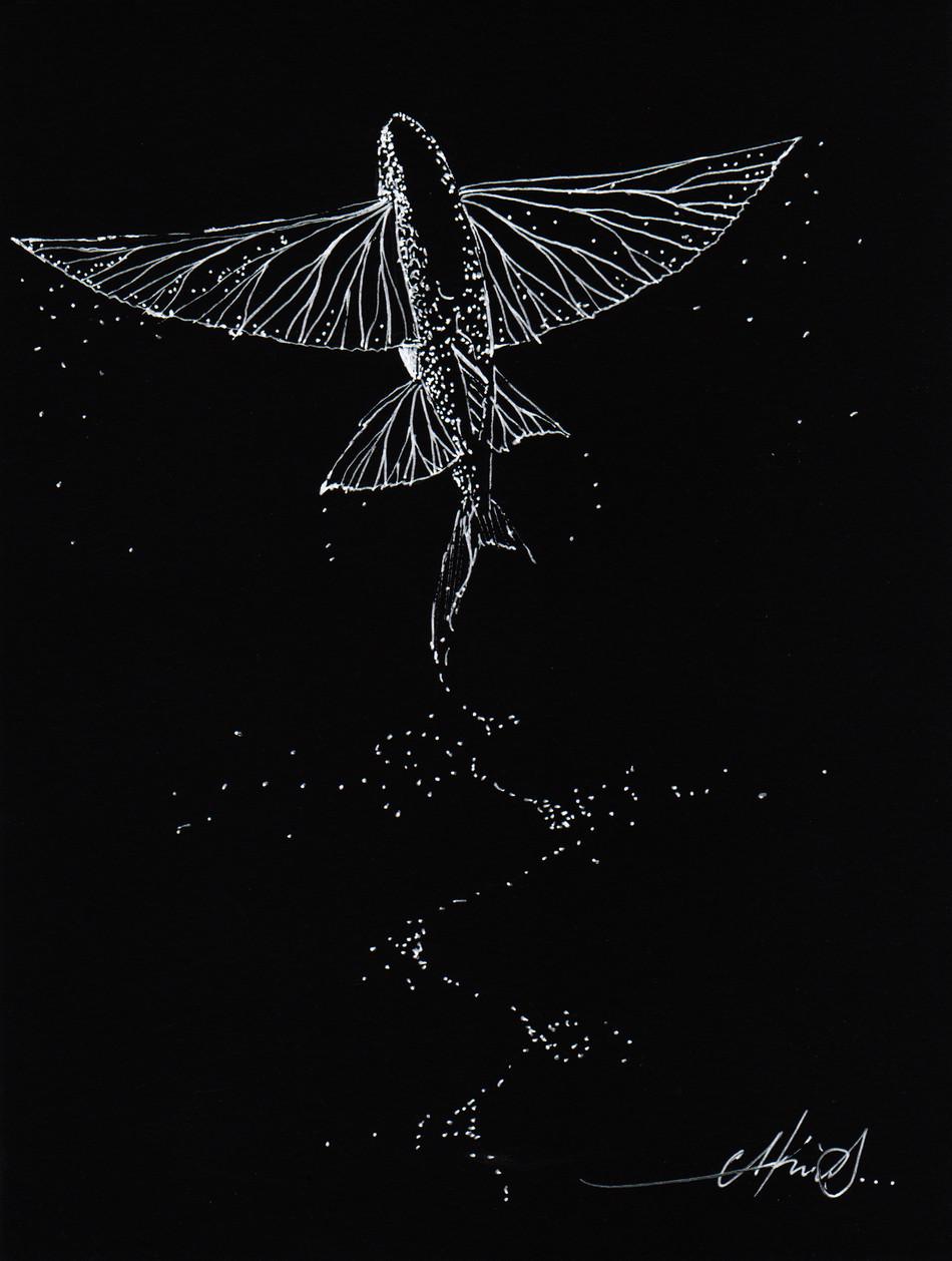 Flying fish dark