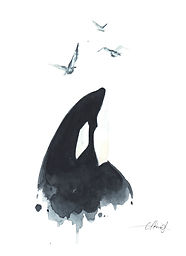 killer whale orca spy hopping watercolor akris painting
