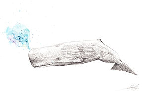 Sperm whale watercolor akris painting