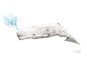 Sperm whale watercolor akris painting