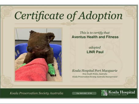 OUR ADOPTED KOALAS