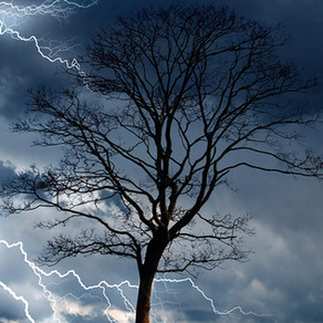 What to Do If Your Tree is Struck By Lightning