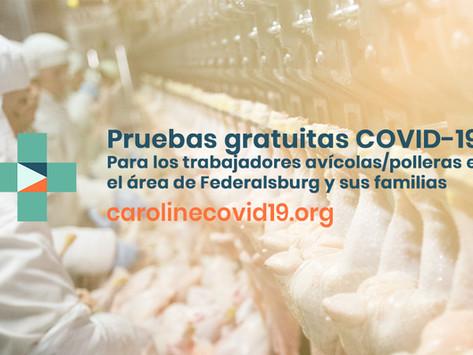 Pruebas gratuitas COVID-19 para los trabajadores avícolas/polleras en el área de Federalsburg