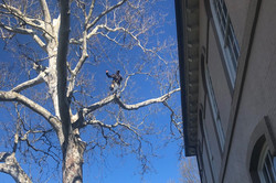 """Eastern Tree Service """"Climber"""" used to trim trees when equipment can't access an area"""