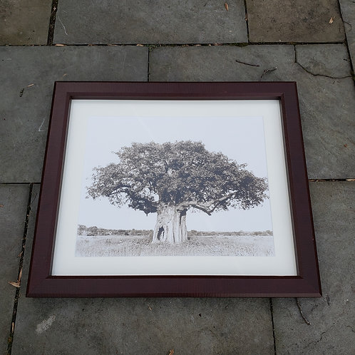 Framed Baobab Tree Photograph
