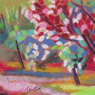 Flowering Trees - Pastel