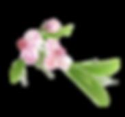 blossom.bmp