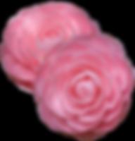 camellia2.png