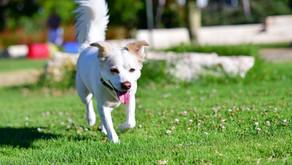 פחד מכלבים-איך מטפלים ואיך מתמודדים?
