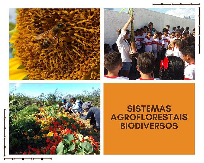 SISTEMAS AGROFLORESTAIS BIODIVERSOS (4).