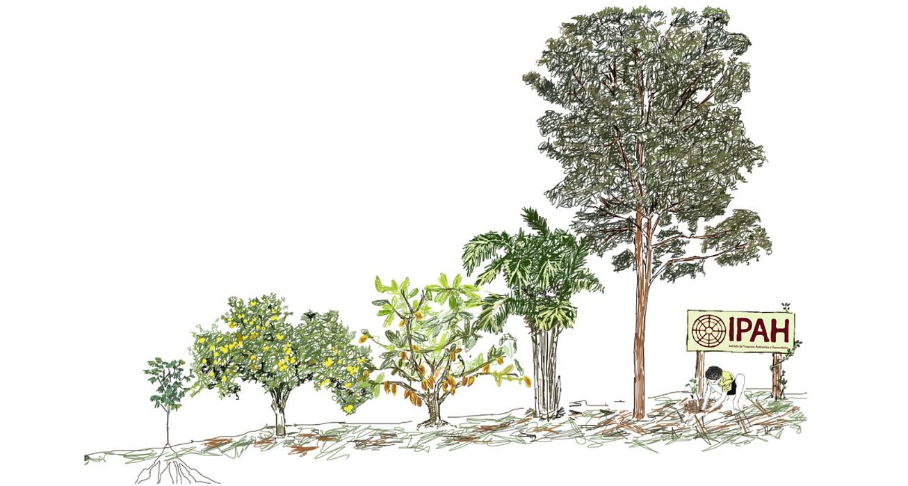 agrofloresta ilustrada 2.png