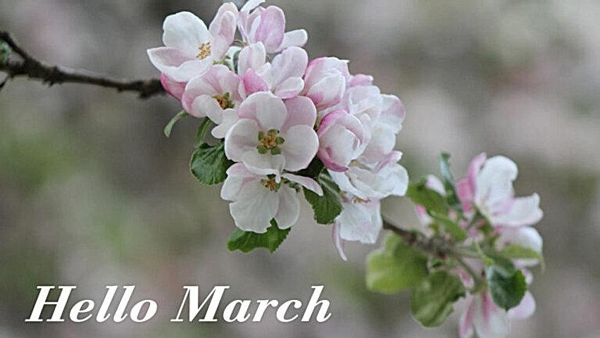 hello-march-wallpaper-spring-desktop-bac