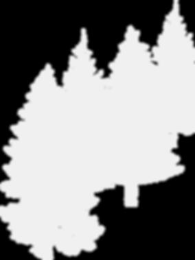 spruce-310688_960_720 копия.png