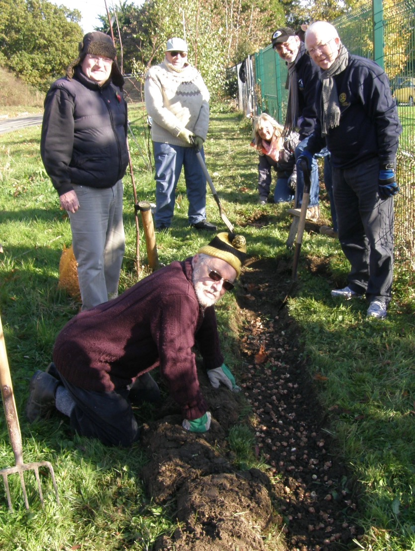 Crocus planting - End Polio Now