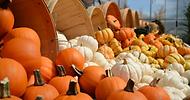 pumpkins .png