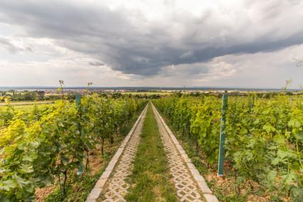 Víno Hladký_2.jpg
