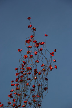 Poppies tour: poppies wave
