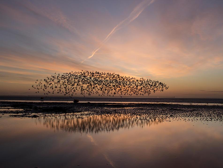 simon fowler photography_The Thames Estuary - Shoeburyness