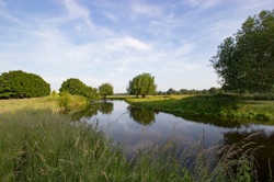 River Stour bank