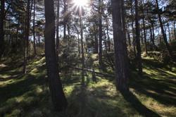 Forest Norfolk Coast