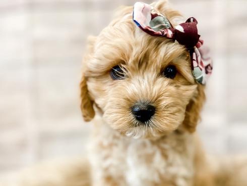 Pup 1.jpg