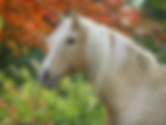 Animal Communication for horse