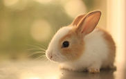 Animal Communication for rabbits