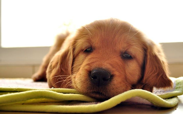 Signs of Your Pet is Dying-Process of Natural Elements