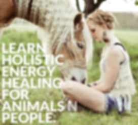 Animal communication and energy healing workshops in singapore