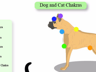 Chakra Healing For Your Dog
