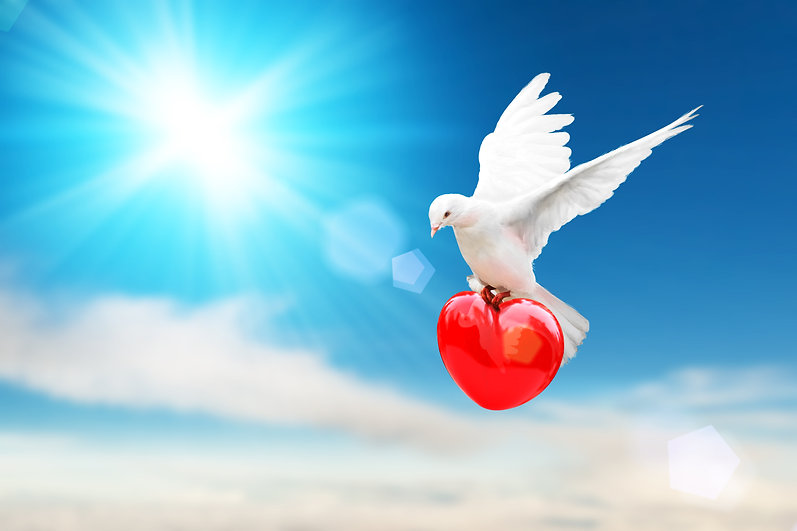 white dove holding red heart shape flyin