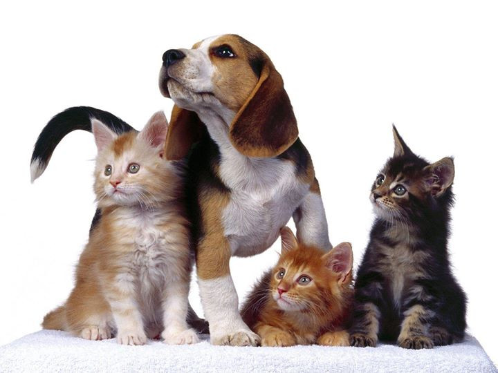 Animal Communcaion