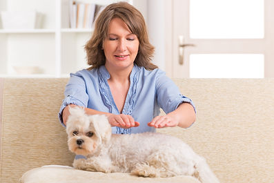 Woman doing Reiki therapy for a dog, a k