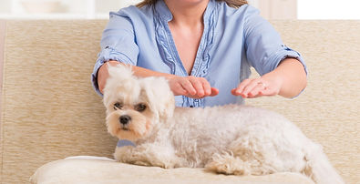 Distant Energy healing for Animals