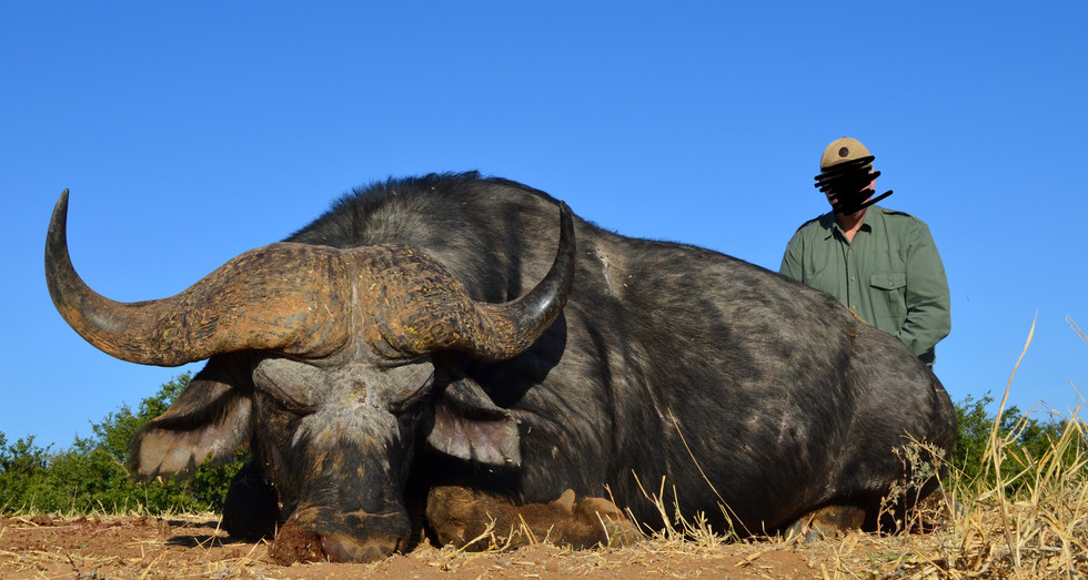 2016 BUFFALO HUNTING - SHAUN BUFFEE SAFARIS