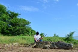 CROCODILE HUNTING - SHAUN BUFFEE SAFARIS