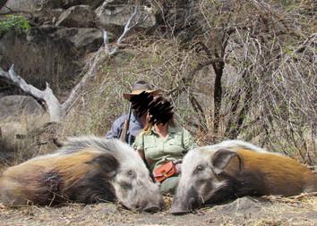 BUSHPIG HUNTING - SHAUN BUFFEE SAFARIS
