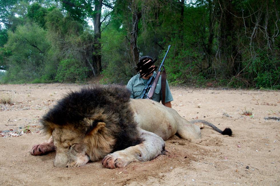 2013 LION HUNTING - SHAUN BUFFEE SAFARIS