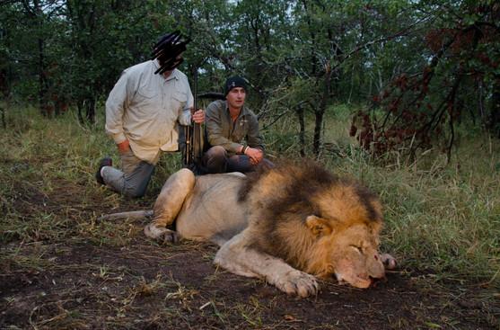 2016 LION HUNTING - SHAUN BUFFEE SAFARIS