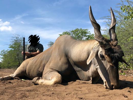 2019 ELAND HUNTING - SHAUN BUFFEE SAFARIS