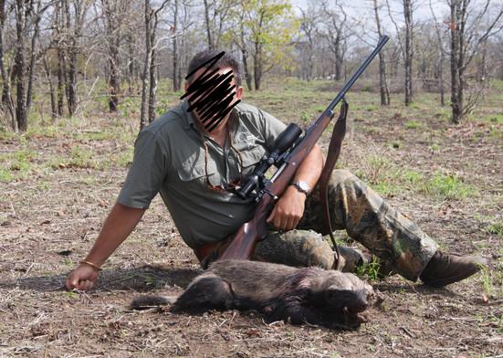 HONEY BADGER HUNTING - SHAUN BUFFEE SAFARIS