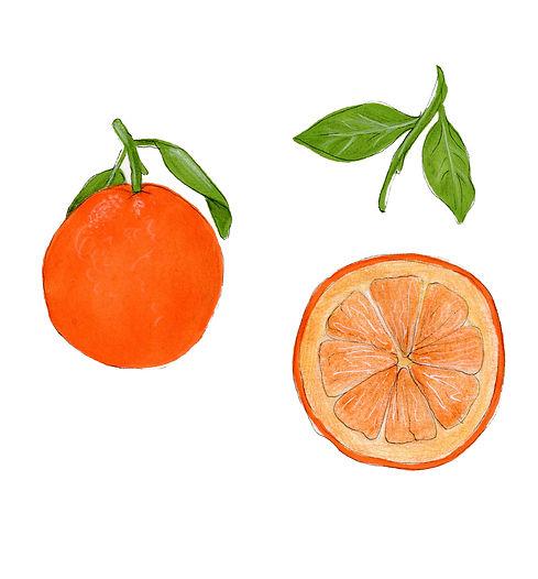 oranges orange slice illustration
