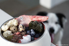 homemade-raw-dog-food-3-credit.jpg