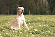 Dog%20Portrait%20_edited.jpg