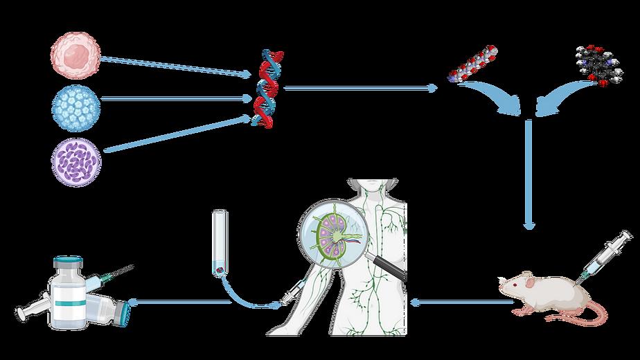 Altevax diagram 2.png