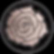 JRDrosePinkRoseTexture-01.png