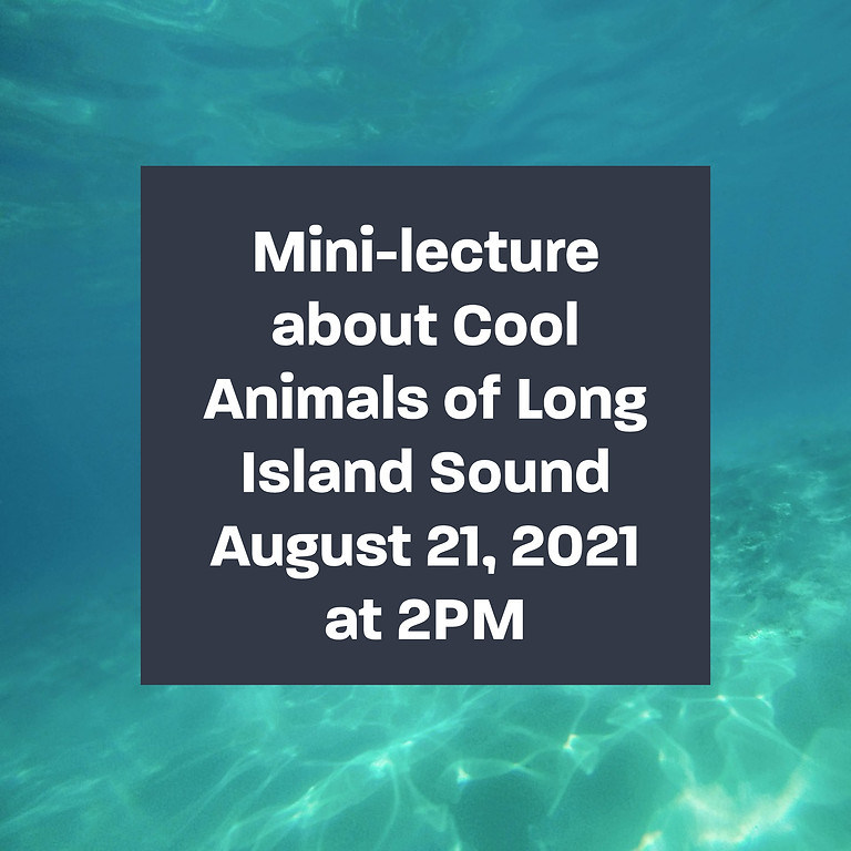 Mini-lecture about Cool Animals of Long Island on Horton Point Lighthouse Lawn