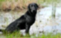 Molly.6.jpg