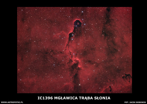 Elefant Trunk Nebula